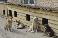 """Как """"фабрика смерти"""" стала первым приютом для бездомных животных"""