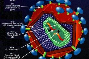 Во Франции обнаружили новый штамм ВИЧ