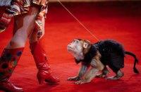 Мінприроди винесло на Кабмін законопроект про цирк без диких тварин