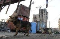 В Голосеевском районе Киева бешеная собака искусала человека