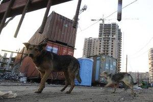 Немецкая принцесса приехала в Киев спасать бездомных собак