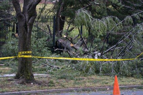У Львівській області повалене вітром дерево вбило чоловіка