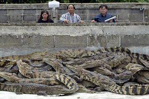 С тайской фермы сбежала сотня крокодилов