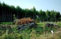 Заблудившего в ровненских лесах ребенка ищут 160 человек