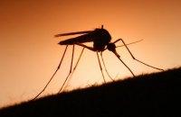 Тропічну малярію виявили у Львові