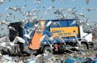 Мусорный кризис перерастает в мусорный коллапс: государство умыло руки