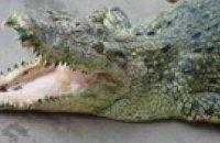 В Одессе пойман крокодил