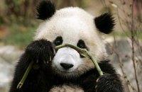 П'ятнична панда #97