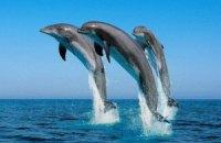 Американцы создали переводчик с языка дельфинов
