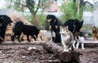 Європарламент прийняв резолюцію проти нелегального продажу котів і собак