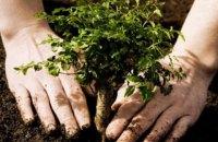 Этой весной в Киеве высадили почти тысячу деревьев