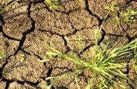 Через посуху та спеку в Україні потерпає половина посівів