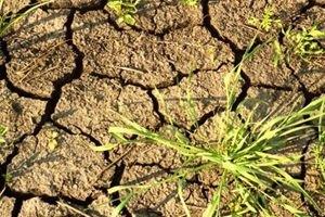 От засухи и жары в Украине страдает половина посевов