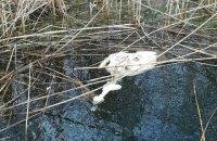 Держпродспоживслужба назвала причину загибелі лебедів на Херсонщині