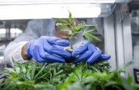 Профильный комитет Рады поддержал принятие законопроекта о легализации лекарств с медицинским каннабисом