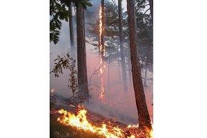 Прокуратура Херсонської області порушила кримінальну справу за фактом підпалу лісу