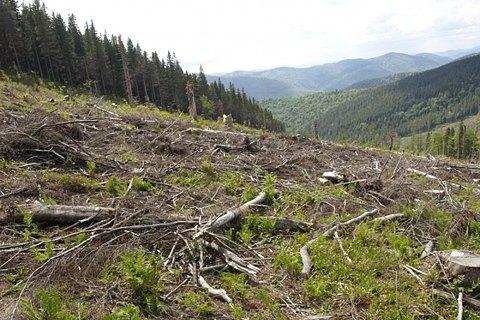 Обыски в ГПСУ прошли по делу о вырубке украинского леса словаками