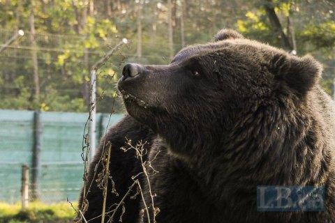 У Нью-Джерсі працівники складу Amazon постраждали від спрею для відлякування ведмедів