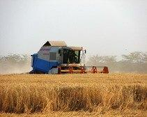 Кабмин планирует поднять цену на сельскохозяйственные земли на 70%