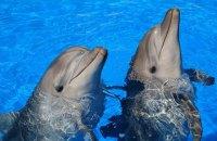 В оккупированном Крыму боевые дельфины украинских ВМС погибли от голода