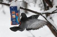На севере и западе Украины завтра снег, порывы ветра до 20 м/с