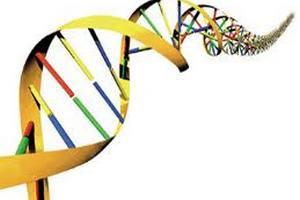 Дослідники продемонстрували на мишах ефективність генної терапії