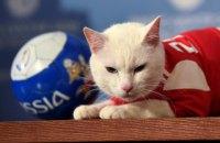 Оракулом Євро-2020 буде кіт Ахілл