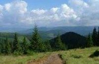 Киевлян просят не ходить в лес из-за клещей