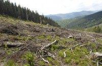 Держлісагентство оприлюднило дані про масштаби вирубування лісу