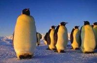 Ученые разобрались с перемешиванием пингвинов