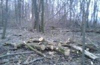 Возле Белой Церкви остановили незаконную вырубку леса