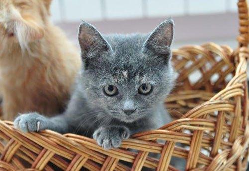 Кошечка Тифани от читательницы Анны