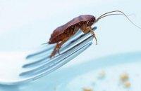 """В """"Укрзализныце"""" рассказали, как борются с тараканами"""