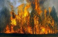 По всей Украине, кроме Карпат, сохраняется высокий уровень пожарной опасности, - ГосЧС