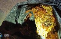 CБУ заблокувала масштабну контрабанду бурштину до Азії