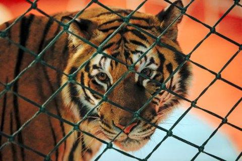 Черкасский горсовет запретил передвижные зверинцы и цирки