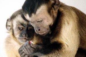 Ученые создали рекламную кампанию для обезьян