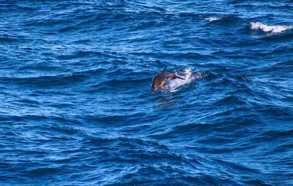 Фото з міжнародному авіаобліку дельфінів у Чорному морі