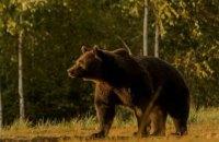 Активісти звинуватили принца Ліхтенштейну у вбивстві найбільшого ведмедя Європи
