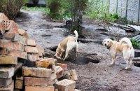 В Сумской области на мусорке обнаружили два мешка с убитыми собаками и котами