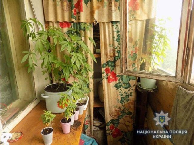Выращивание конопли тара дикий конопля