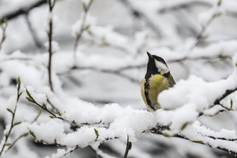 Комфортна погода: синоптик дала прогноз на четвер