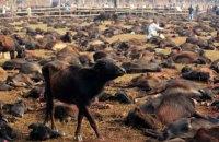 На релігійному фестивалі в Непалі скасували найбільше в світі жертвопринесення