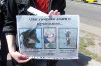 В Киеве прошла акции против эвтаназии бродячих животных