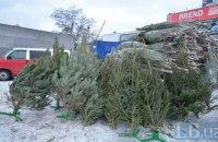 Лесагентство обнаружило увеличение незаконно срубленных новогодних елей