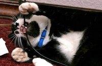 Домашние кошки оказались кровожадными хищниками