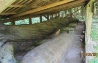 Чи потрібен Києву 1200-літній дуб?