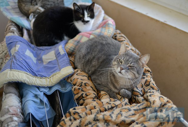 Котики помогают сушить белье