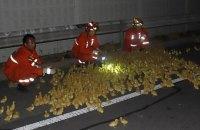 В Китае во время ДТП на дорогу выпали 10 тысяч утят