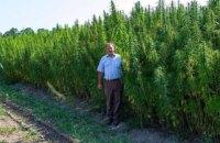 Мишель Терещенко продал бизнес по выращиванию конопли